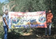 #الكتلة_الإسلامية تشارك في موسم جني الزيتون بالمنطقة الوسطى.